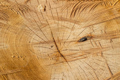 Texture of a rustic circle lumber wood with natural spots, scars Royalty Free Stock Photo
