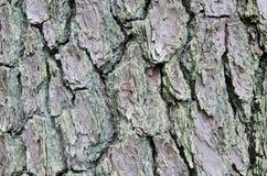 Texture rustique deux d'écorce d'arbre images libres de droits