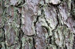Texture rustique une d'écorce d'arbre photographie stock