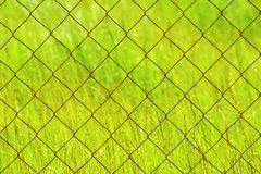 Texture rusty chain-link on a green background Stock Photography