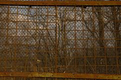 Texture - rusty grate tightened by dried weaving plants against a blue sky royalty free stock image