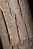 Texture sèche 1 d'écorce d'arbre Photographie stock libre de droits