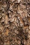 Texture sèche d'écorce d'arbre de Brown Photographie stock libre de droits