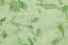Texture sèche de papier de lame Images libres de droits