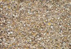 Texture sèche de thé de fleur de camomille Photos stock
