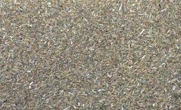Texture sèche de thé de graines de fenouil Photographie stock libre de droits