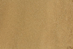Texture-sable Image stock