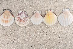 Texture of sand. With seashells in a row Stock Images