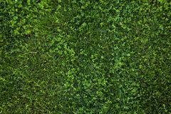 Texture sans couture d'herbe verte Texture de fond d'herbe verte Images stock