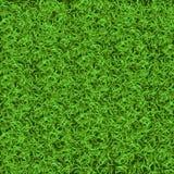 Texture sans couture d'herbe verte Sans couture dans seulement la dimension horizontale Photo libre de droits