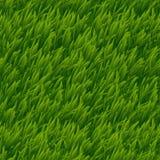 Texture sans couture de vecteur d'herbe verte Photos stock