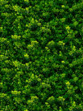 Texture sans couture des feuilles vertes Images libres de droits