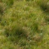 Texture sans couture des terres d'herbe Photographie stock
