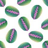 Texture sans couture, feuille de maranta de fond Feuille tropicale de calibre pour le tissu de conception Image de vecteur Usine  illustration de vecteur