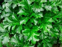Texture sauvage de feuilles Images libres de droits
