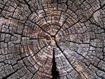 Texture saw cut logs. Royalty Free Stock Photo