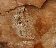 Texture saw cut the old tree. Royalty Free Stock Photo