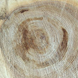 Texture saw cut the old tree. Royalty Free Stock Photography