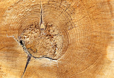 Texture saw cut of the wood logs Stock Photography