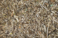 The texture of sawdust Stock Photo