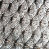 Texture scales fish Royalty Free Stock Image