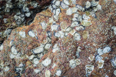 Texture of sea animal on the rock Stock Photo