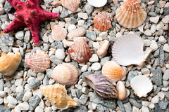 Texture of sea bottom covered with colorful seashells and starfish Royalty Free Stock Images