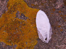 Texture of sea. Texture of cuttlefish bone lying on the granite Stock Photo