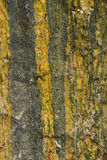 Texture of sea stone with vertical stripes. Stock Image