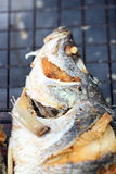 Texture of seabass or lates fish deep fried. Stock Photo
