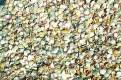 Texture seashells Stock Images