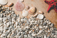 Texture of seashells and pebbles lying on wooden desk Royalty Free Stock Image