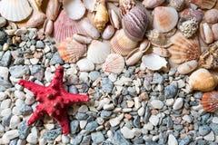Texture of seashells and starfish lying on seashore Royalty Free Stock Images