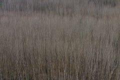 Texture serrée des arbres Image stock