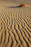 Texture and shadow on the desert sand dunes Royalty Free Stock Photo
