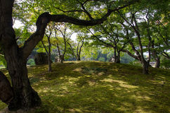 Texture of Shadow of Okayama Garden (Korakuen) Royalty Free Stock Photo