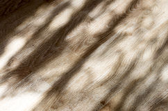 The texture of the shadows Stock Image