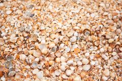 Shell beach texture. Concept of travel, leisure, relaxation. Background with copy space for design mockup, screensaver for device stock images