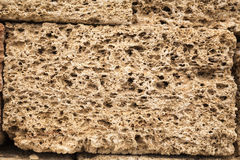 Texture shell limestone closeup Stock Photography