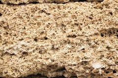 Texture shell limestone closeup Royalty Free Stock Photography
