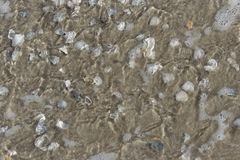 Texture shell. A lot of sea shell on the beach Stock Photo