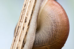 The texture on shell in nature building Stock Photography