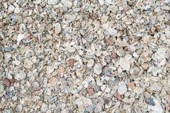 Texture Shells on the beach. Texture Shells on floor near the beach Soft tone Royalty Free Stock Photography