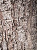 Texture. Shot of brown tree bark, filling the frame Royalty Free Stock Photo