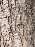 Texture. Shot of brown tree bark, filling the frame Stock Photography