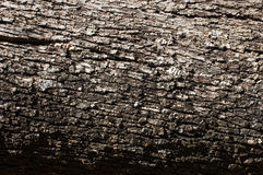Texture shot of brown tree bark, filling the frame. Stock Image