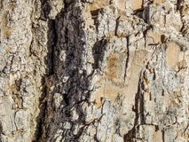 Macro Texture of Tree Bark in the Sun stock photography