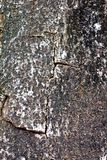 Texture shot of tree bark Royalty Free Stock Photos