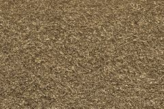 Texture shredded dried leaves of gray yellow color Royalty Free Stock Photo