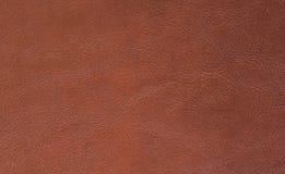 Texture- skin Stock Image